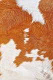 Fragmento de una piel de una vaca. Fotografía de archivo