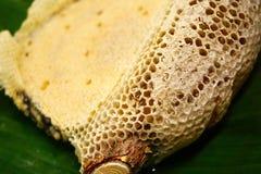 Fragmento del panal con las células completas Cera de abejas nuevamente tirada del panal de la abeja de la miel Foto de archivo