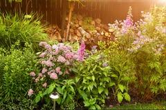 Fragmento do jardim do verão de Beauriful com cama de flor Imagem de Stock