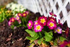 Fragmento exterior bonito do jardim com flores Fotografia de Stock