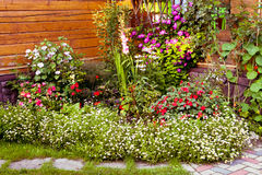 Fragmento exterior bonito do jardim com flores Fotos de Stock