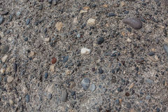 Fragmento fóssil com os seixos finos do mar Imagens de Stock