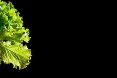 Fragmento verde fresco da salada da alface no fundo preto fotografia de stock