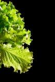 Fragmento verde fresco da salada da alface no fundo preto imagem de stock