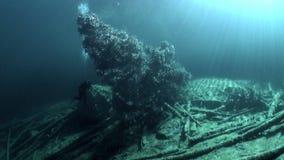 Fragmentos das árvores e da grama na paisagem subaquática do lago Fernsteinsee filme