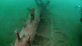 Fragmentos das árvores e da grama na paisagem subaquática do lago Fernsteinsee video estoque