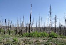 Fragmentos de árboles quemados Imagenes de archivo