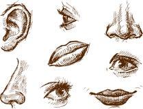 Fragmentos de uma face ilustração stock