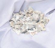 Fragmentos del hueso Imagen de archivo libre de regalías