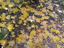 Fragmentos del otoño Vidrio quebrado de la hoja foto de archivo libre de regalías