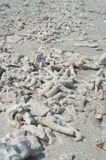 Fragmentos do coral Fotografia de Stock Royalty Free