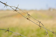 Fragments of barbed wire against the background of green grass. Volgograd, the Volgograd region Russia April 29, 2017 Stock Photography
