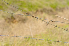 Fragments of barbed wire against the background of green grass. Volgograd, the Volgograd region Russia April 29, 2017 Royalty Free Stock Photo