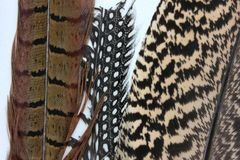 Fragments of feathers of birds. Fragments of beautiful feathers of birds pheasant, woodpecker and peacock stock photography
