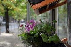 Fragments of the city life in Sofia. royalty free stock photography