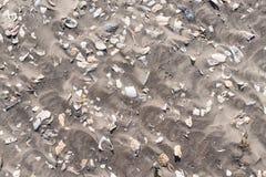 Fragments de coquilles de mer sur le sable image stock