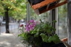 Fragments de la vie de ville à Sofia Photographie stock libre de droits