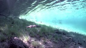 Fragments of trees and grass in underwater landscape of Fernsteinsee lake. Beautiful emerald green alpine attractions of nature of Fernpass in Nassereith Tyrol stock footage