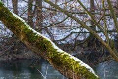 Fragments of Winter Park. Park winter river Stock Photos