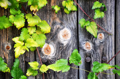 Fragments of wooden doors Stock Photography