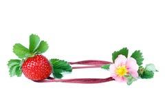 Fragola con un fiore della fragola sopra bianco immagine stock libera da diritti
