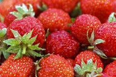 Fragola della macrofotografia Bacche di estate Bacche dolci di estate Fotografie Stock Libere da Diritti