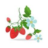 Fragola di bosco e fiore royalty illustrazione gratis