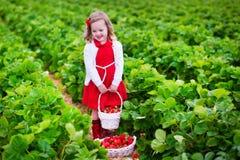 Fragola di raccolto della bambina su un campo dell'azienda agricola Fotografia Stock Libera da Diritti