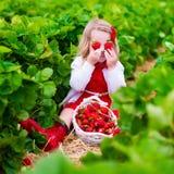 Fragola di raccolto della bambina su un campo dell'azienda agricola Immagini Stock Libere da Diritti