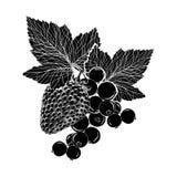 Fragola e un ramo del ribes con le foglie, a mano disegno, isolato Illustrazione Colore nero Immagine Stock