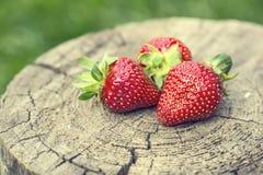 Fragola Fragola rossa Fragole raccolte fresche nelle posizioni differenti immagine stock