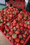 Fragola Fragole organiche fresche nella luce del giorno su un mercato Fruttifica il fondo Alimento sano Fondo della fragola Immagine Stock Libera da Diritti