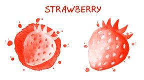 Fragola Illustrazione dell'acquerello Fotografie Stock