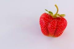Fragola isolata su fondo bianco, fragola naturale rossa, alimento sano Fotografia Stock Libera da Diritti