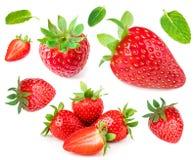 Fragola isolata su priorità bassa bianca Intero strawber maturo rosso Fotografie Stock