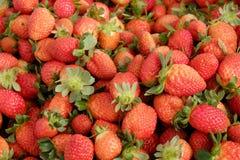 Fragola, Lat del Da, dalat, frutta, agricoltura Immagini Stock Libere da Diritti