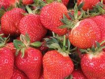 Fragola Lotti delle fragole Bacche rosse bazaar coda di cavallo verde Frutta da vendere Ho anni da vendere Bacche fresche Fres fotografia stock libera da diritti