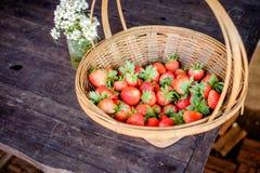 Fragola nell'azienda agricola Fotografia Stock