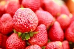 Fragola rossa fresca Fotografie Stock