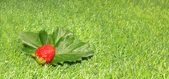 Fragola su erba verde Fotografia Stock Libera da Diritti