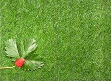 Fragola su erba verde Immagini Stock Libere da Diritti