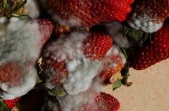 Fragole della muffa Fotografia Stock