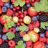 Fragole della raccolta della frutta di bacche delle bacche, mirtilli Immagine Stock