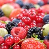 Fragole della raccolta della frutta di bacche delle bacche, mirtilli Immagini Stock