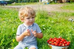 Fragole di raccolto del ragazzo del bambino sull'azienda agricola, all'aperto Immagini Stock