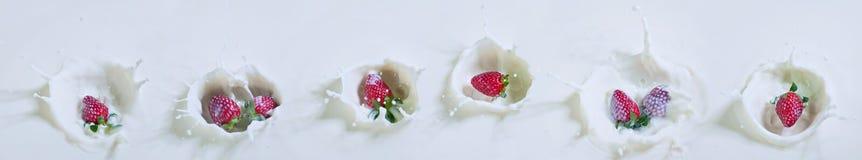 Fragole e latte ammassanti Immagini Stock