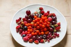 Fragole, lamponi, rosso e ribes nero, ciliegia, bacche di sorbo in un piatto Immagini Stock Libere da Diritti