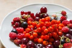 Fragole, lamponi, rosso e ribes nero, ciliegia, bacche di sorbo in un piatto Immagini Stock