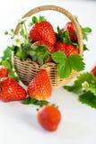 Fragole mature fresche con le foglie ed il fiore Fotografia Stock Libera da Diritti