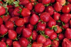Fragole mature rosse Immagini Stock
